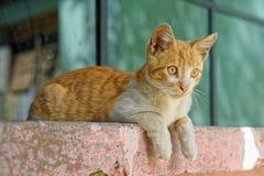 Γάτα στο βήμα στοκ φωτογραφίες