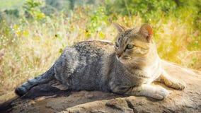 Γάτα στο βράχο Στοκ φωτογραφία με δικαίωμα ελεύθερης χρήσης