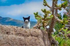 γάτα στο γήινο τοίχο Στοκ Φωτογραφίες