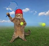 Γάτα στο γήπεδο 2 αντισφαίρισης στοκ φωτογραφίες με δικαίωμα ελεύθερης χρήσης