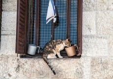 Γάτα στο γείσο Στοκ Εικόνες