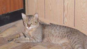 Γάτα στο γραφείο περιοχών μου στοκ φωτογραφία