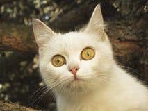 Γάτα στο δέντρο Στοκ Φωτογραφία