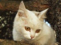 Γάτα στο δέντρο Στοκ Εικόνα