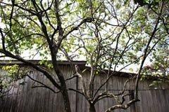 Γάτα στο δέντρο στοκ φωτογραφίες