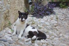 Γάτα στο δρόμο Στοκ Εικόνα