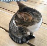 Γάτα στο εσωτερικό Στοκ εικόνα με δικαίωμα ελεύθερης χρήσης