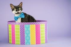 Γάτα στο ζωηρόχρωμο κιβώτιο Στοκ εικόνες με δικαίωμα ελεύθερης χρήσης