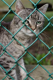 Γάτα στο ζωικό καταφύγιο Στοκ φωτογραφία με δικαίωμα ελεύθερης χρήσης