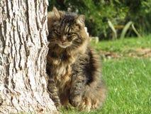 Γάτα στο ζώο τομέων χλόης Στοκ Εικόνες
