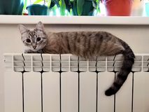 Γάτα στο θερμαντικό σώμα στοκ εικόνες με δικαίωμα ελεύθερης χρήσης