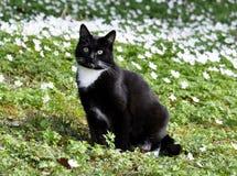 Γάτα στο λιβάδι λουλουδιών Στοκ Φωτογραφία