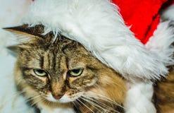 Γάτα στο καπέλο Στοκ Φωτογραφία