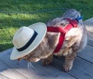 Γάτα στο καπέλο Στοκ εικόνες με δικαίωμα ελεύθερης χρήσης
