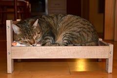 Γάτα στο κρεβάτι στοκ εικόνες