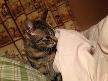 Γάτα στο κρεβάτι Στοκ Φωτογραφίες