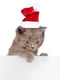 Γάτα στο κόκκινο καπέλο Χριστουγέννων που κρυφοκοιτάζει από πίσω από τον κενό πίνακα διάστημα Στοκ Εικόνες