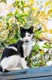 Γάτα στο μπλε Στοκ φωτογραφία με δικαίωμα ελεύθερης χρήσης