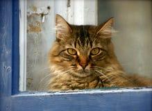 Γάτα στο μπλε παράθυρο Στοκ Φωτογραφία
