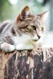 Γάτα στο ναυπηγείο στοκ εικόνα με δικαίωμα ελεύθερης χρήσης