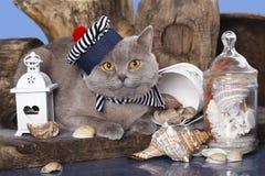 Γάτα στο ναυτικό καπέλων στοκ εικόνες