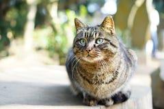 Γάτα στο νησί Enoshima Στοκ Εικόνες