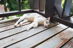 Γάτα στο ξύλινο πάτωμα Στοκ εικόνες με δικαίωμα ελεύθερης χρήσης
