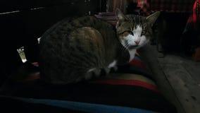 Γάτα στο παλαιό του χωριού εσωτερικό απόθεμα βίντεο