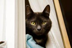 Γάτα στο παράθυρο Στοκ Φωτογραφία