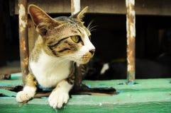 Γάτα στο παράθυρο Στοκ Εικόνες