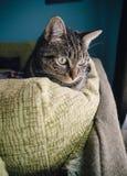 Γάτα στο σπίτι Στοκ Φωτογραφίες