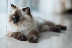 Γάτα στο σπίτι Στοκ εικόνα με δικαίωμα ελεύθερης χρήσης