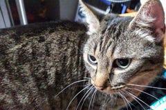 Γάτα στο σχέδιο στοκ φωτογραφία με δικαίωμα ελεύθερης χρήσης