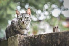 Γάτα στο φράκτη πετρών πέρα από τον κήπο και το δέντρο να κοιτάξει κάτω σε έναν κήπο Στοκ Φωτογραφίες