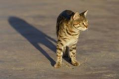 Γάτα στο φως ανατολής Στοκ φωτογραφίες με δικαίωμα ελεύθερης χρήσης