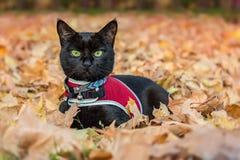 Γάτα στο φύλλο στοκ εικόνες