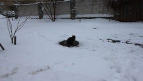 Γάτα στο χιόνι το χειμώνα απόθεμα βίντεο