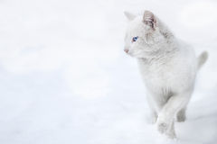 Γάτα στο χιόνι Στοκ εικόνες με δικαίωμα ελεύθερης χρήσης