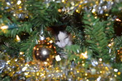 Γάτα στο χριστουγεννιάτικο δέντρο Στοκ Φωτογραφίες
