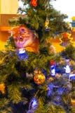 Γάτα στο χριστουγεννιάτικο δέντρο Κόκκινο γατάκι νέο έτος στοκ εικόνες με δικαίωμα ελεύθερης χρήσης