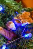 Γάτα στο χριστουγεννιάτικο δέντρο Κόκκινο χαριτωμένο γατάκι νέο έτος στοκ εικόνα