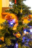 Γάτα στο χριστουγεννιάτικο δέντρο Κόκκινο χαριτωμένο γατάκι νέο έτος στοκ φωτογραφία