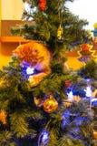 Γάτα στο χριστουγεννιάτικο δέντρο Κόκκινο χαριτωμένο γατάκι νέο έτος στοκ εικόνες
