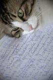 Γάτα συγγραφέων Στοκ Εικόνες