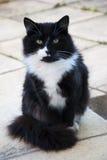 Γάτα συνεδρίασης στοκ φωτογραφίες με δικαίωμα ελεύθερης χρήσης