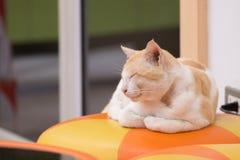 γάτα Ταϊλανδός Στοκ Εικόνες