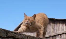 Γάτα τεντώματος Στοκ εικόνα με δικαίωμα ελεύθερης χρήσης