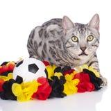 Γάτα της Βεγγάλης με τη σφαίρα ποδοσφαίρου στοκ εικόνα
