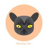 Γάτα της Βομβάη κινούμενων σχεδίων στη διανυσματική απεικόνιση κύκλων Στοκ Εικόνα