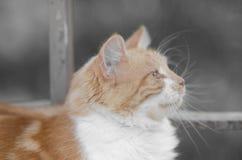 Γάτα της Κύπρου Στοκ φωτογραφία με δικαίωμα ελεύθερης χρήσης